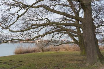 Eichen am Tiefen See Potsdam