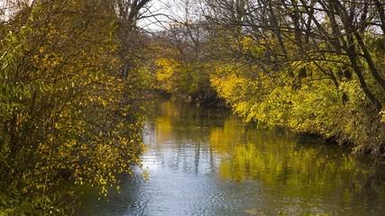kleiner bewachsener Fluss im Herbst 02
