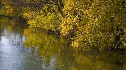 kleiner bewachsener Fluss im Herbst 03