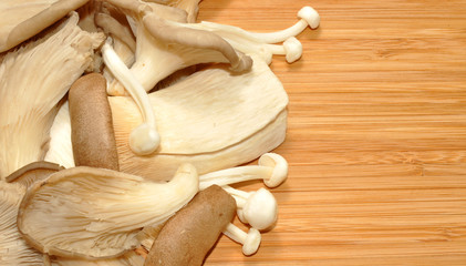 Oyster Mushrooms On Wood Background