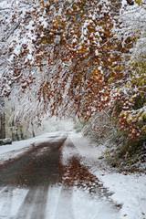 Strasse in Schnee