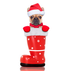 christmas dog in a red santa  boot
