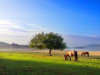 Horses near Nanclares de Gamboa