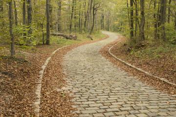 path through forrest