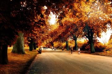autunno a Regent's park