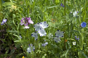 Blumenwiese, Wiesenblumen,