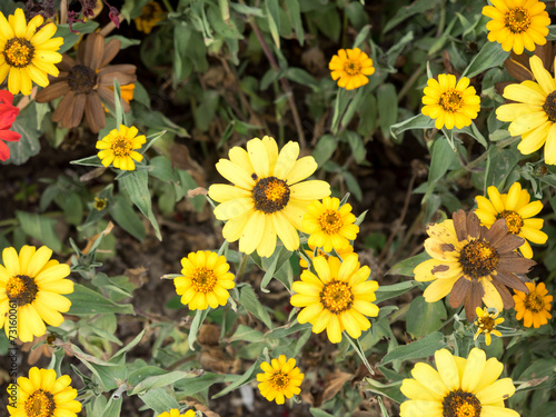canvas print picture Bunte Wildblumen 1