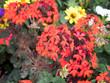 canvas print picture - Bunte Wildblumen 4