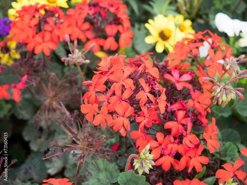 canvas print picture Bunte Wildblumen 4