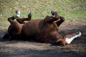 Cavalli al Prato 92
