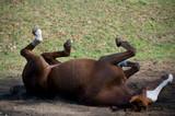 Cavalli al Prato 91