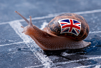 finish line winning of a snail with the colors of England flag