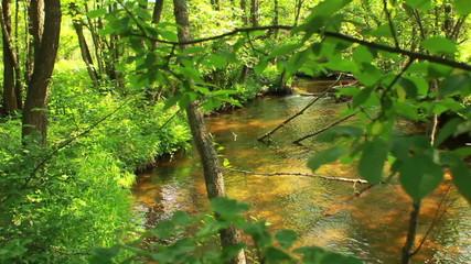 stream through the green foliage