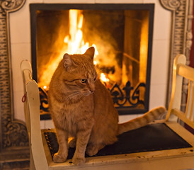 Red cat near fireplace