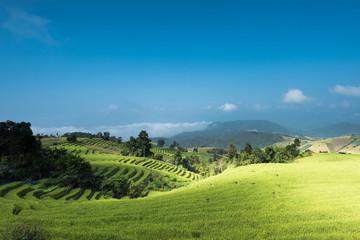 Rice Terrace at Chiangmai province, Thailand