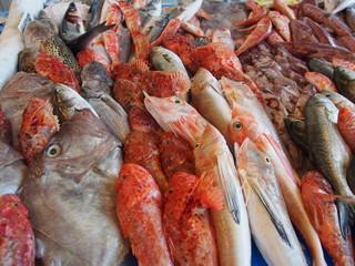 pesce fresco 2