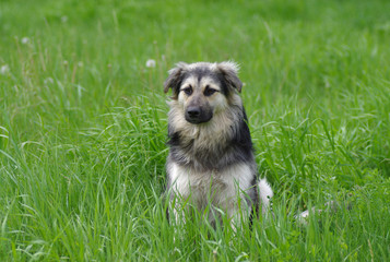 Mixed breed dog having rest in the spring grass