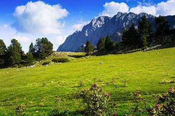 Mountain meadow against rock mount in summer