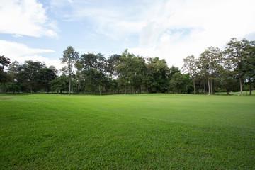 golf course green grass, sport background