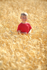 little boy in the wheat field