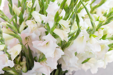 glaïeul blanc