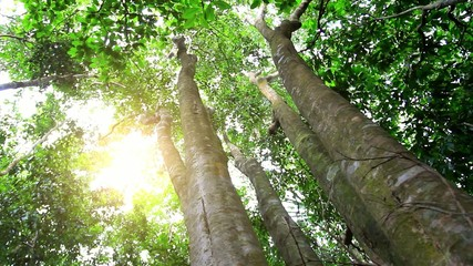 Sun in deep jungle forest. HD. 1920x1080