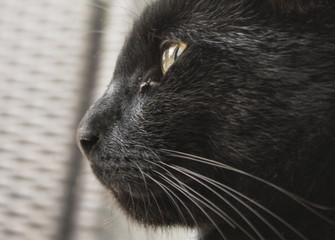 Katze profil