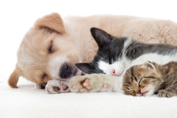 Puppy and kitten sleeps