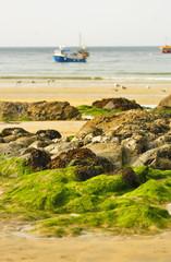 Green algae on the Atlantic coast in Newquay. England.