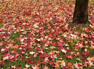 Autumn, fall leaves.