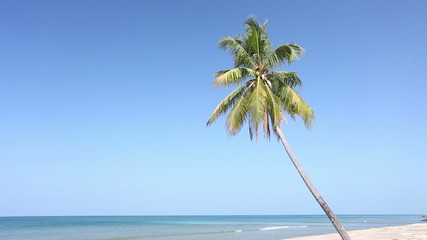 Coconut palm tree at the beach with blue sky background