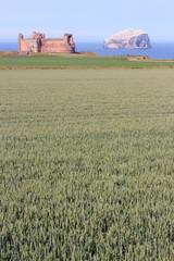 paesaggio di north berwick bass rock scozia