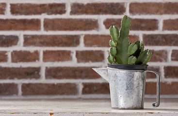 Cactus in vintage zinc pitchers