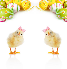 Cute fluffy chicks and Easter Eggs