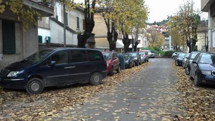 Strada pericolosa causa foglie