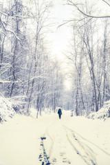inverno nel bosco