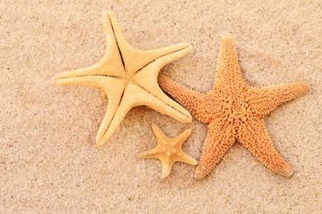 морские звезды на песке