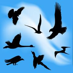 Birds Flying in a Hazy Sky