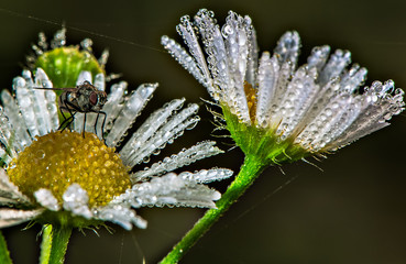 margherita e la mosca