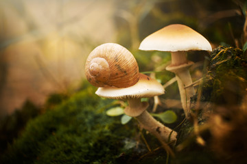 Snail on the mushroom
