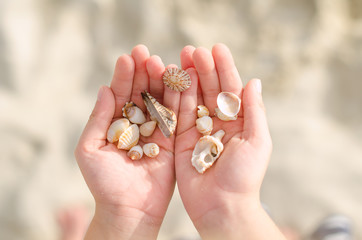 Child hands holding sea shells.