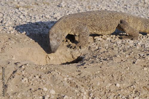 Foto op Plexiglas Krokodil Waran vor seinem Bau, Etoscha-Nationalpark, Namibia, Afrika
