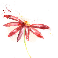 Red flower, watercolor illustration. Floral background.