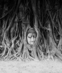 Travel to Thailand, Ayutthaya. Old tree Buddha stone sculpture.
