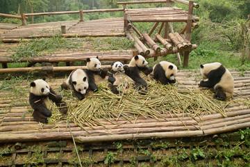 成都のパンダ