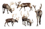 Set of few reindeer