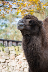 Eating camel in the zoo