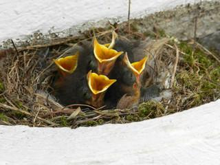 hungry bird beaks