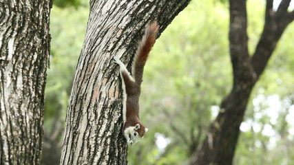 Squirrel eating bread on the tree