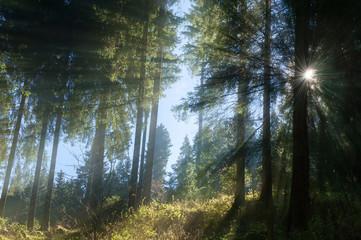 alberi del cansiglio 0089